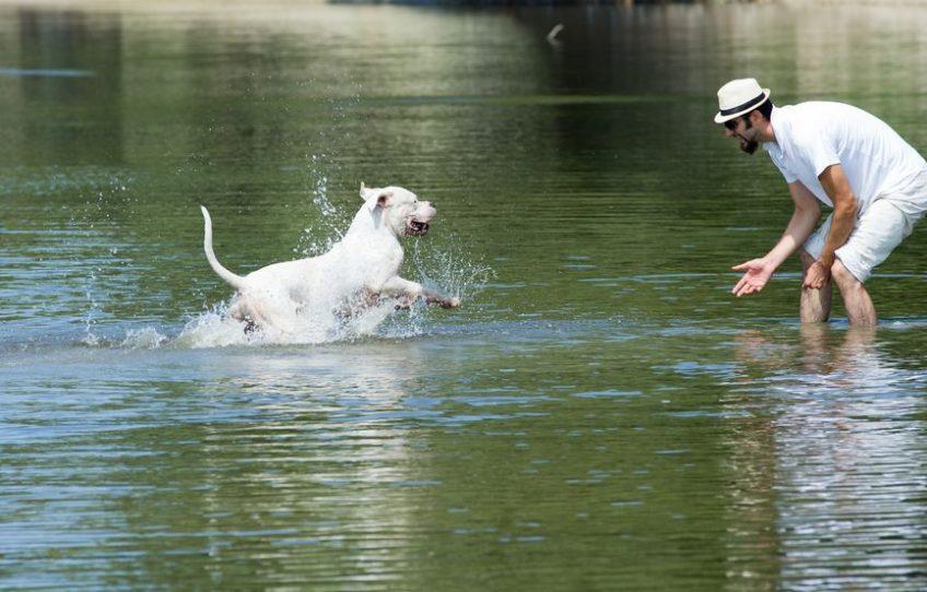 Occuper son chien durant de fortes chaleurs : les baignades