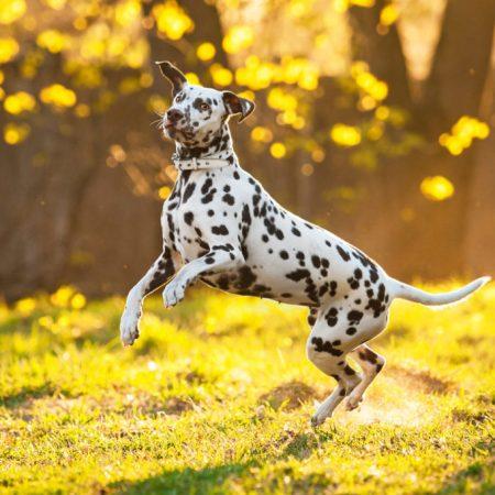 dangers de l'automne pour le chien