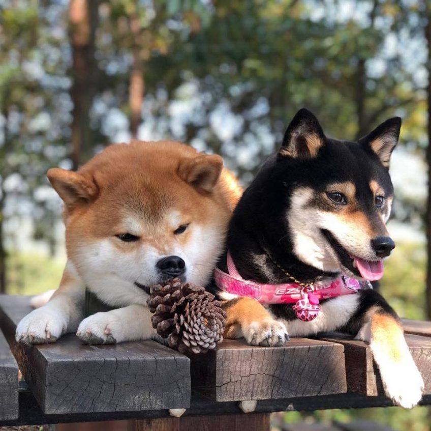Gérer un chien à fort tempérament