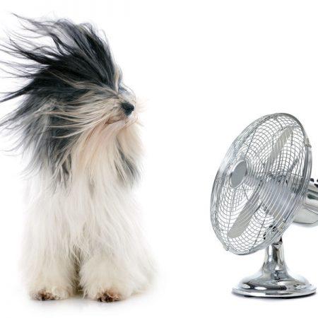 Chien avec ventilateur