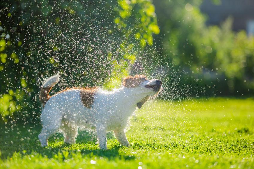 protéger son chien de la chaleur