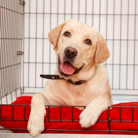 apprentissage de la cage pour votre chien