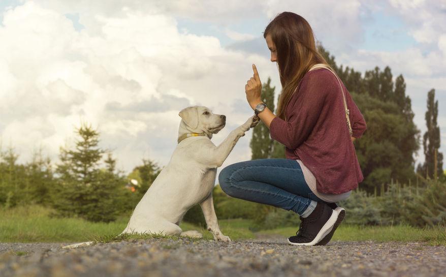 Bien éduquer son chien