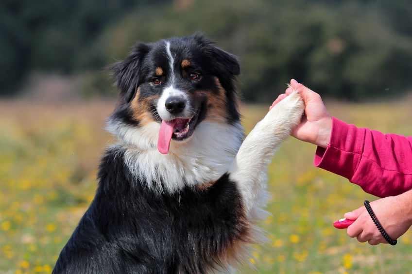 éducation positive pour bien éduquer son chien