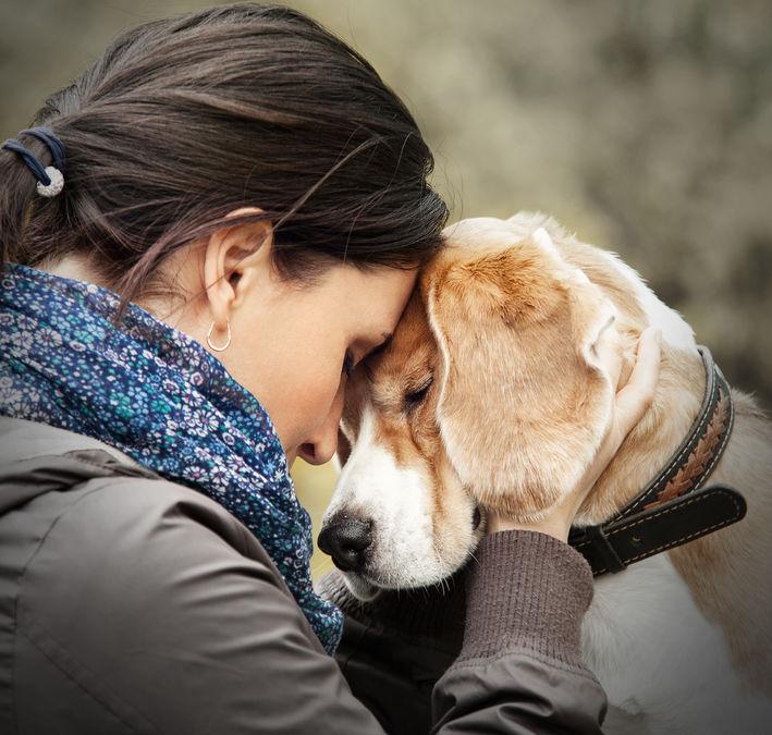 être en harmonie avec son chien