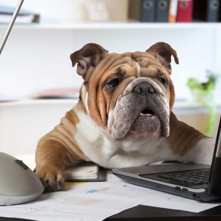 Travailler avec son chien au bureau