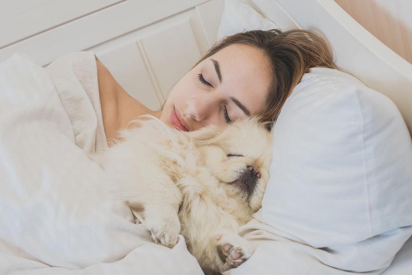 sommeil du chiot avec son maitre