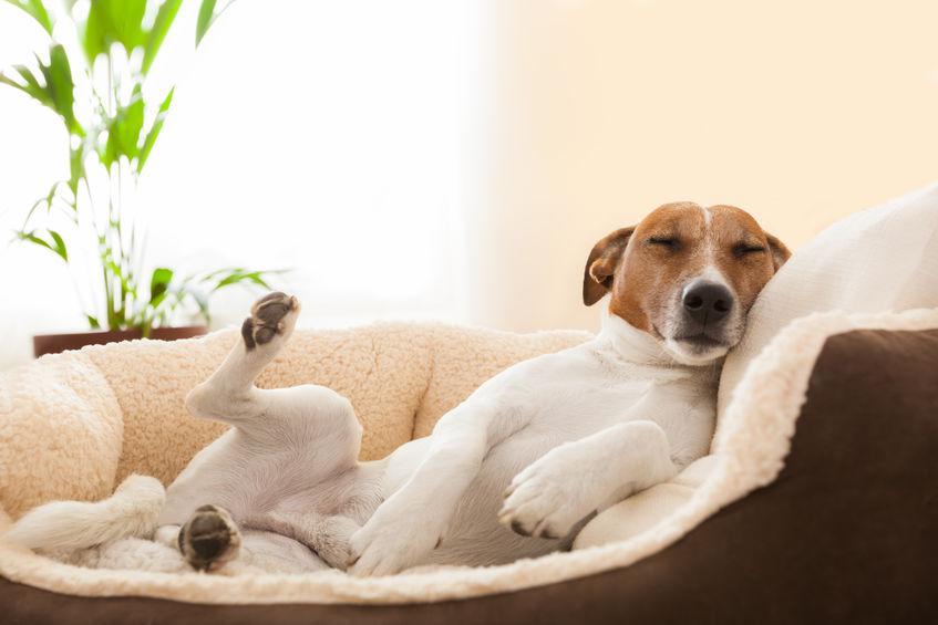 sommeil du chien dans son panier