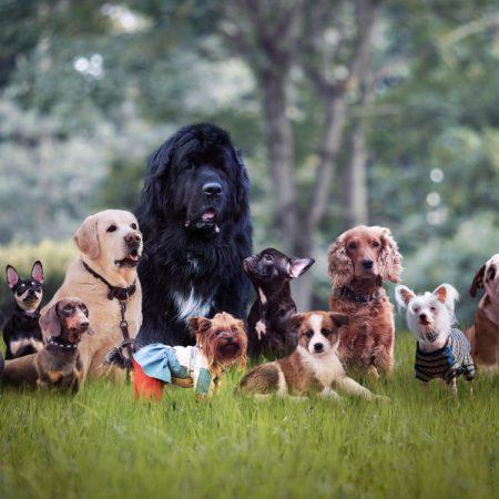 Groupe de chiens wouf wouf dans le jardin