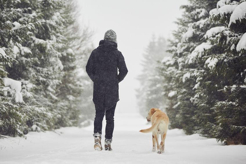 Chien en ballade dans la neige