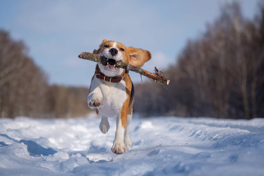 chien durant l'hiver
