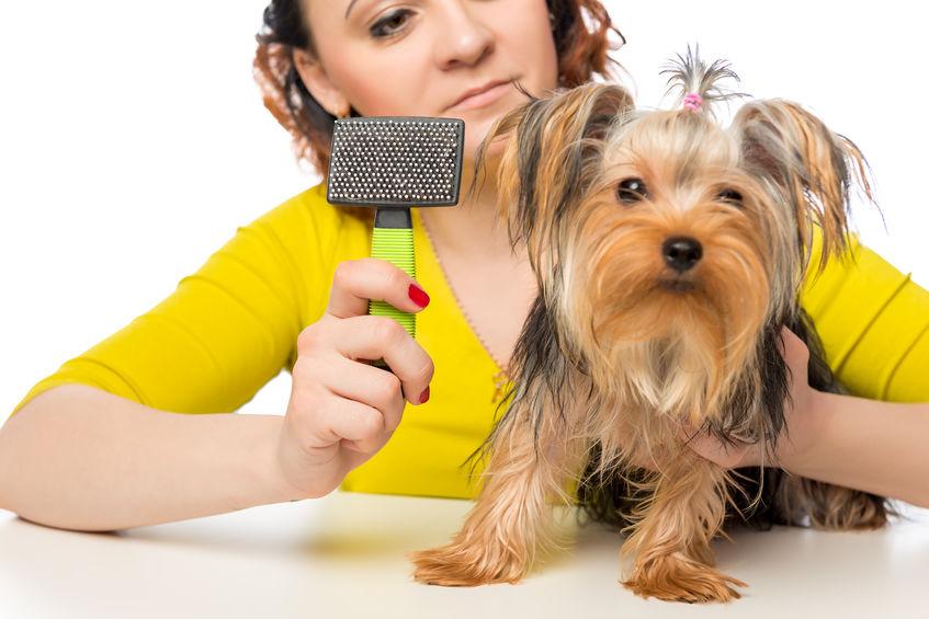 Brosse pour chien : La carde