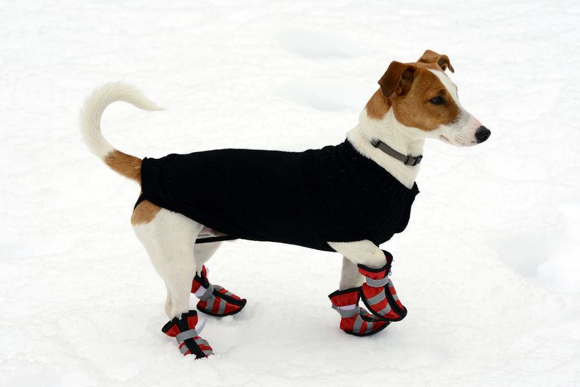 chien avec un manteau