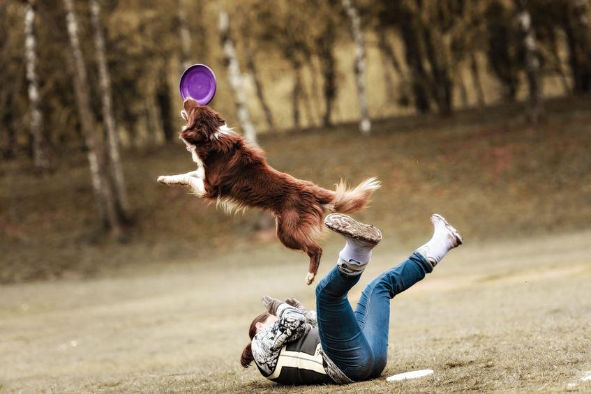 Calmer son chien avec une activité