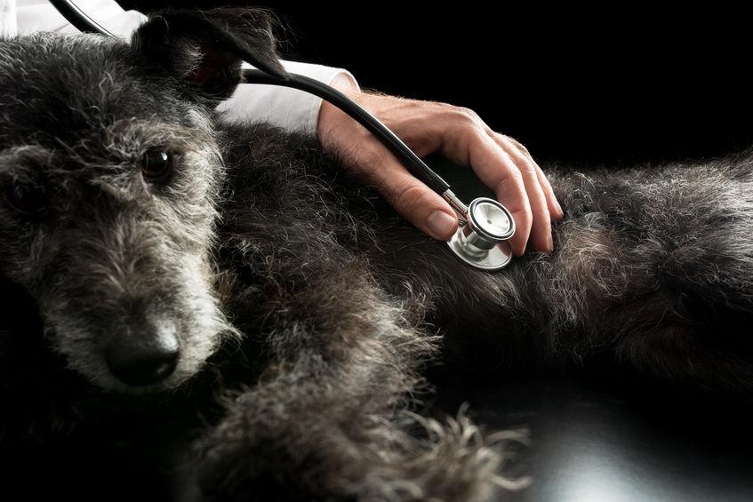 Chien Wouf Wouf chez le vétérinaire