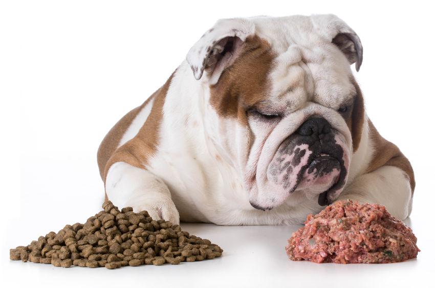 Bonne alimentation pour chien