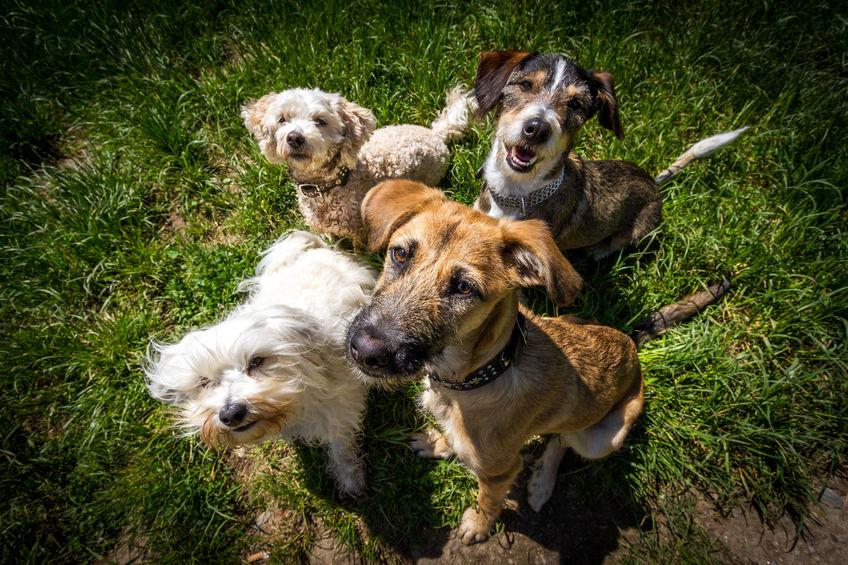 groupe de chien dans l'herbe