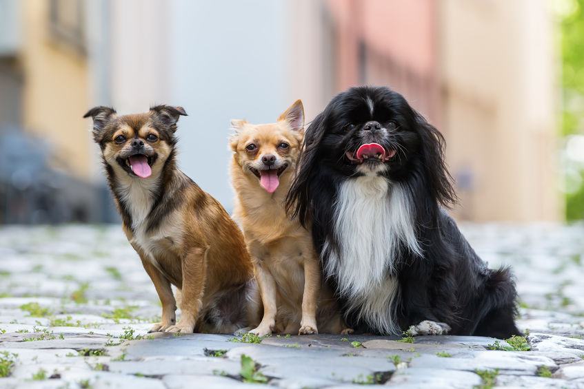 groupe de chiens assis