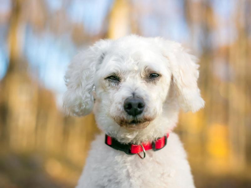 chien qui cligne des yeux