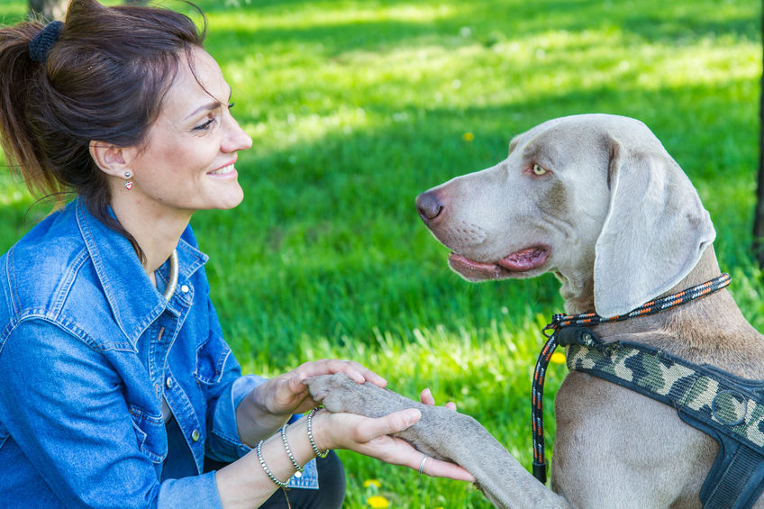 Langage du chien, les signes d'apaisement