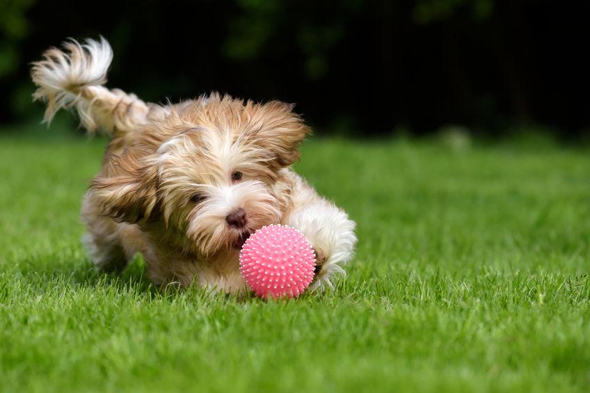chien avec un joute dans le jardin