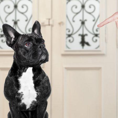 La punition du chien