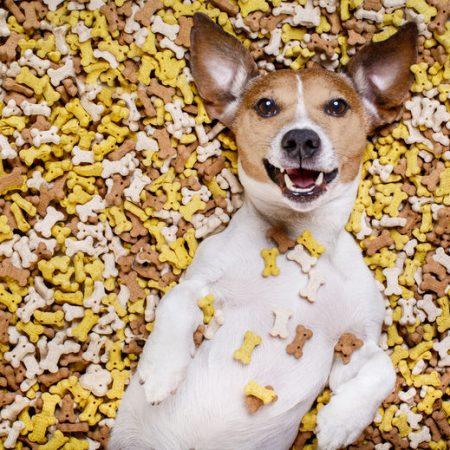 éduquer son chien avec des friandises pour chien