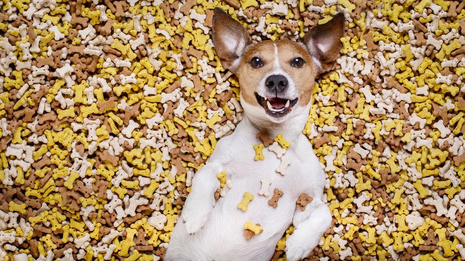 Escabeau Pour Chien - Astuces secrètes - Les bases de l'éducation canine - Tuto