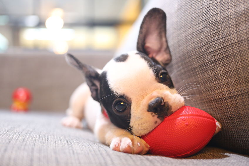 chiot wouf wouf avec une balle