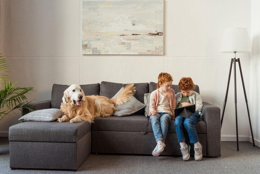 Chien et enfants sur le canapé