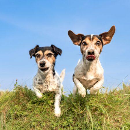 chiens dans le jardin wouf wouf