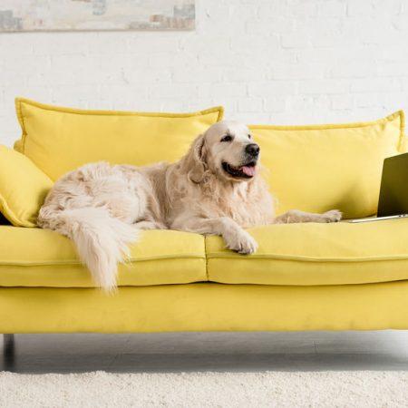 chien sur le canapé