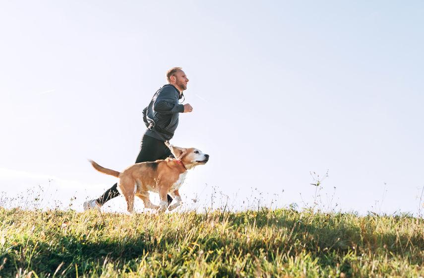 activité sportive du chien