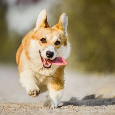chien en pleine forme