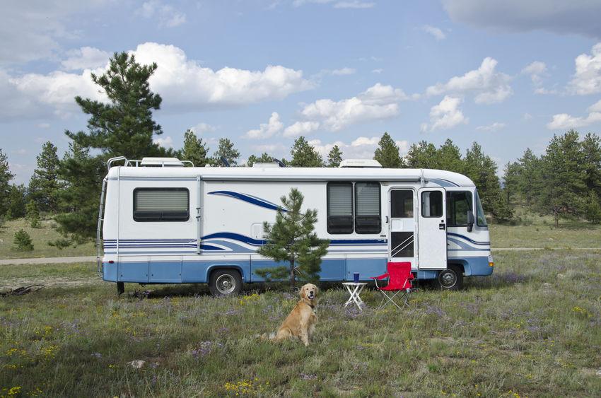 chien devant un camping car