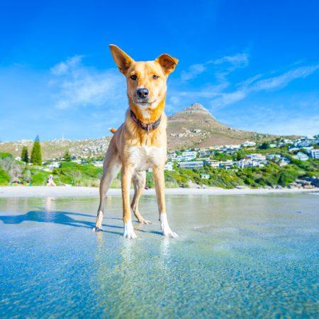chien durant l'été