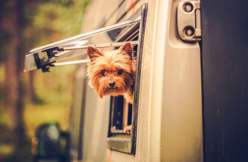 Chien au camping car