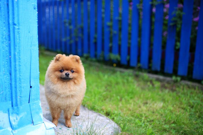 chien de concierge