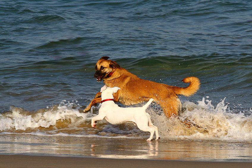 Avantages de l'eau pour les chiens