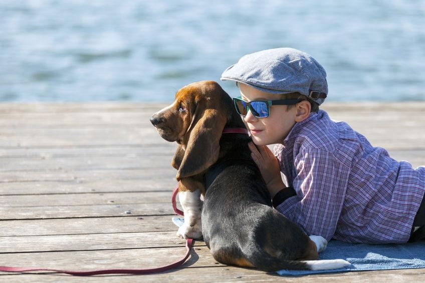 Basset Hound avec un enfant