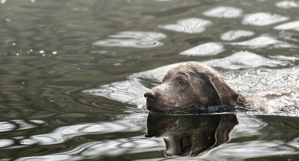 chien dans une riviere