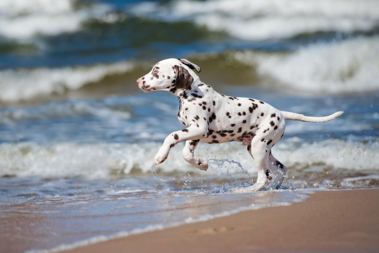 dangers de l'eau pour les chiens