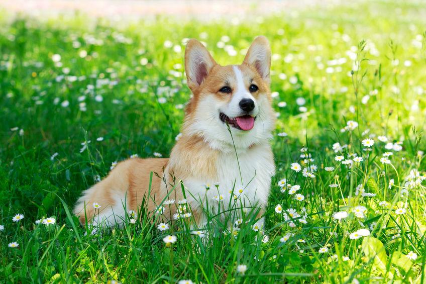 chien wouf wouf à l'extérieur