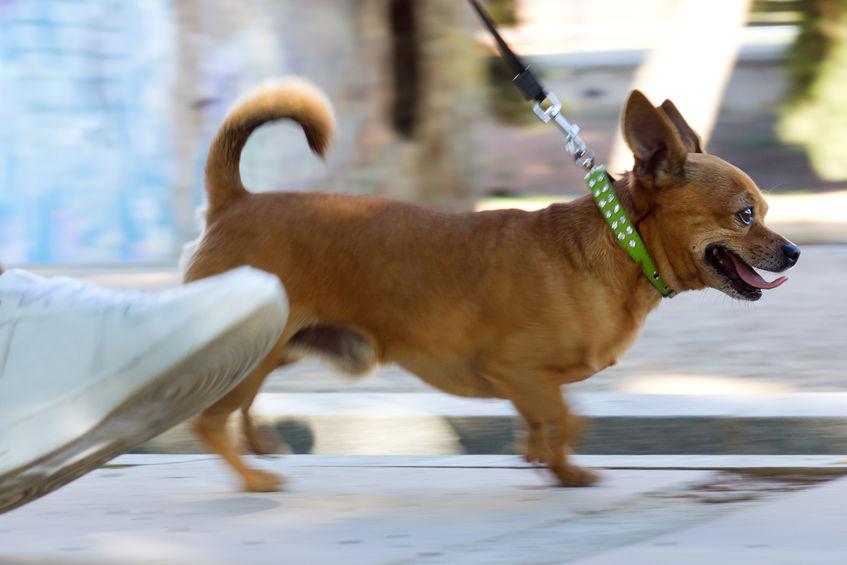Promenade de chien en ville