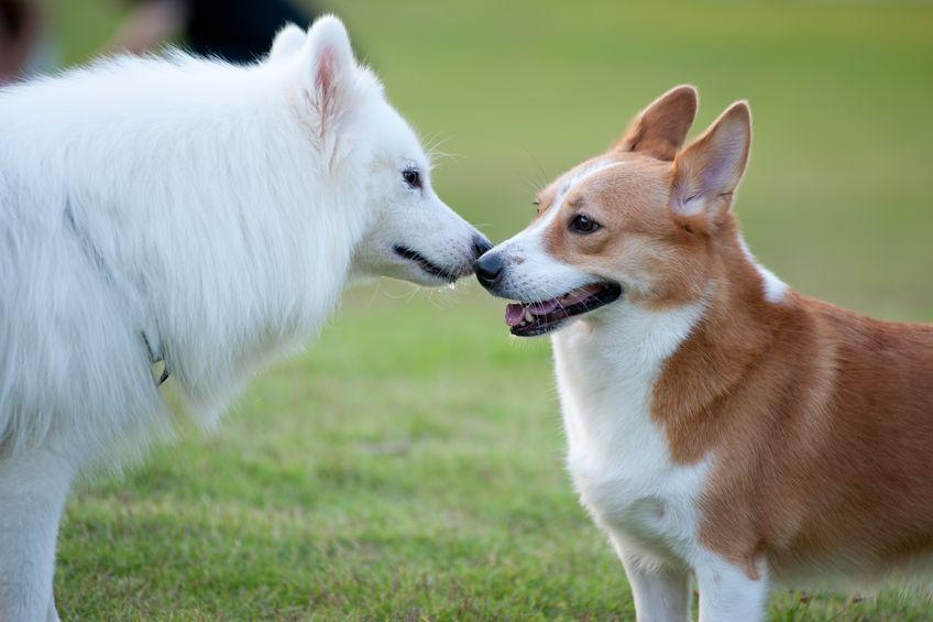 Interaction entre chiens