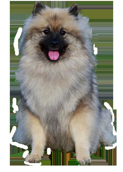 Spitz Loup