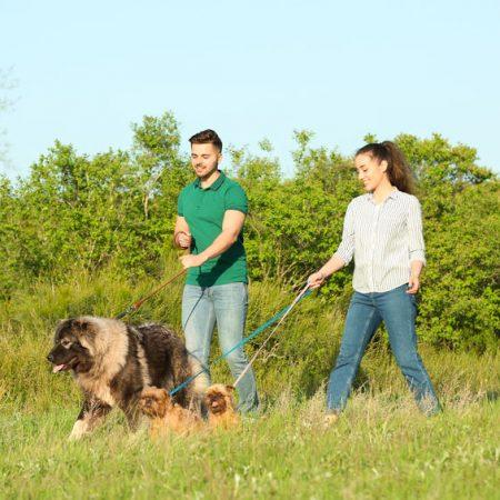 Promener son chien à plusieurs