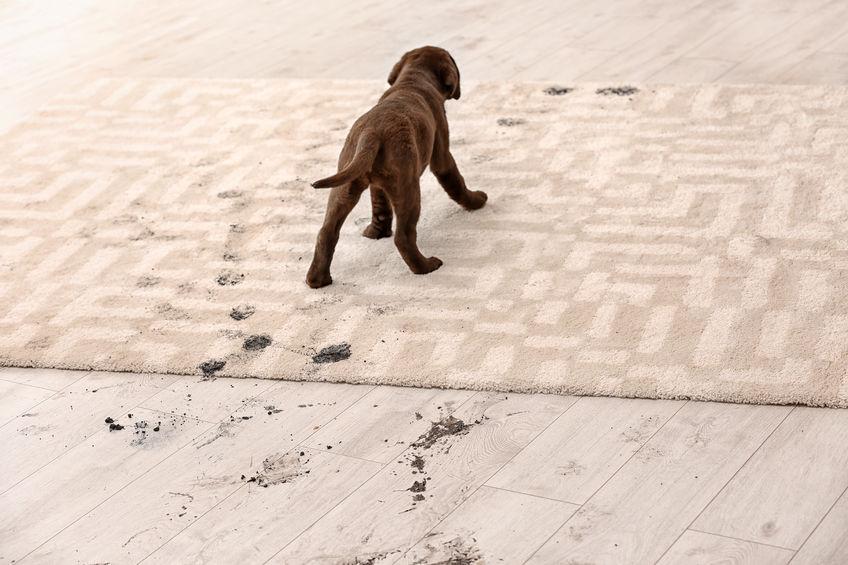 chien pas propre