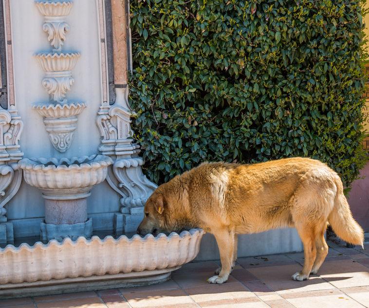 chien qui fugue