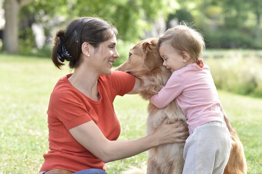chien de famille